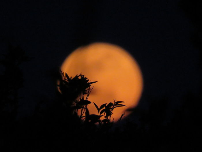 Silhouette Check This Out EyeEm Best Shots Outdoors Orange Color No People Focus On Foreground Orange Moon Moon Moonlight Full Moon Blood Moon Night Fall Moonlight Silhouette Tranquility Night Sky Big Moon Moon Silhouette Moon Rising Beautiful Beautiful Moon  The Moon Eye4photography  Looking At The Sky Night Sky Silhouette