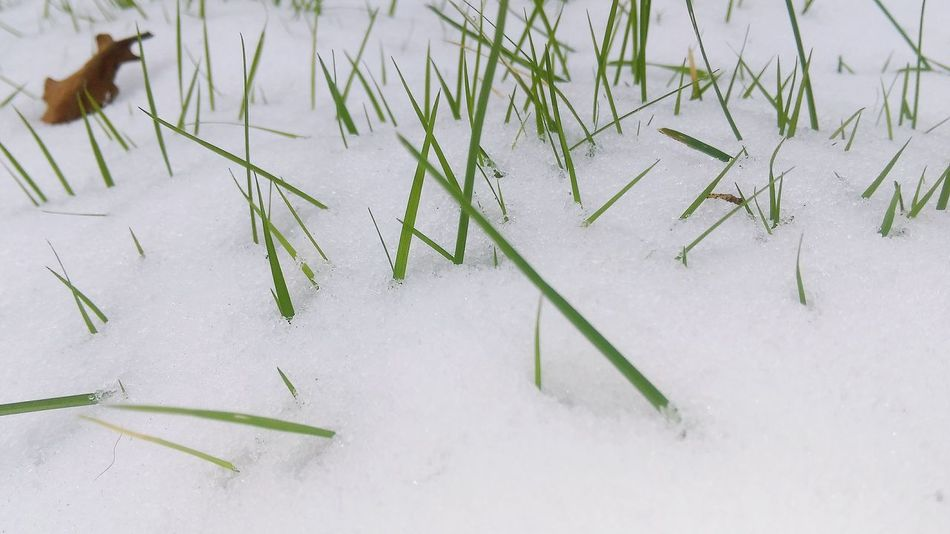 HTC_photography Nature HTC Desire EYE Outdoors Garden Neige Outdoors Close-up Colour Your Horizn