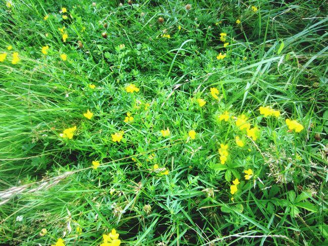 Green Nature EyeEm Nature Lover Flower