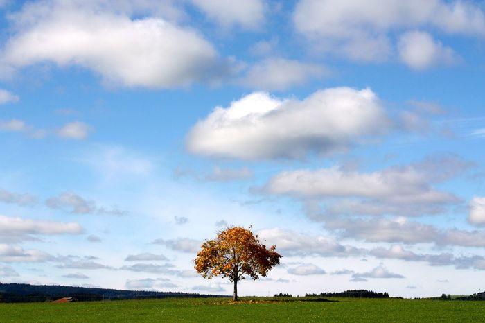 Herbst🍁 Herbststimmung Fallday Bavarian Landscape Pfaffenwinkel Sky Cloud - Sky Beauty In Nature Environment Landscape Tree Nature Scenics - Nature Horizon Day No People Horizon Over Land Field Grass