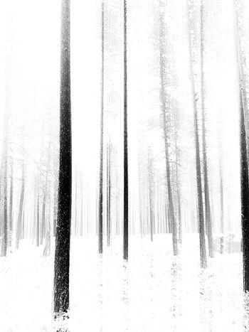 Because I love trees ❄️❄️❄️ TreePorn Trees Blackandwhite EyeEm Nature Lover Tadaa Community Vackra Dalarna EyeEm Best Shots It's Cold Outside