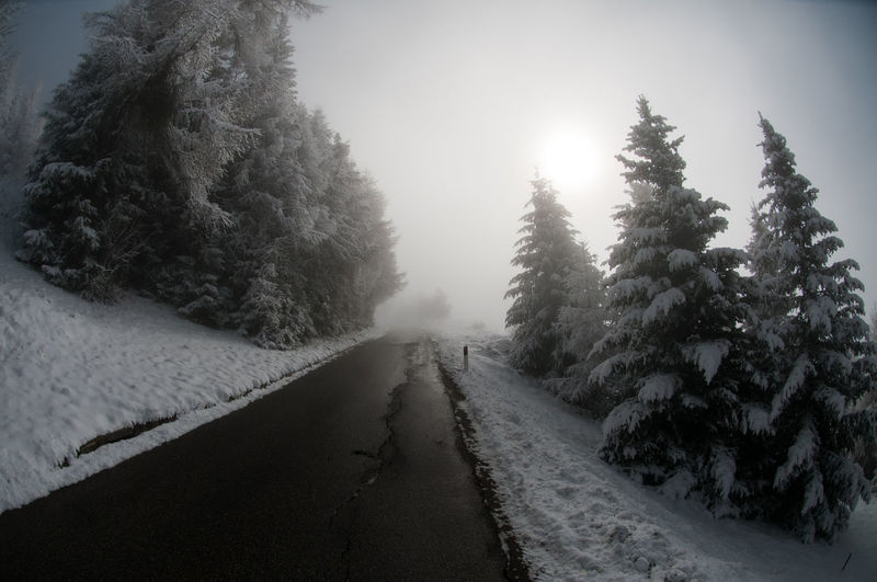 Empty road along snow covered trees during foggy weather