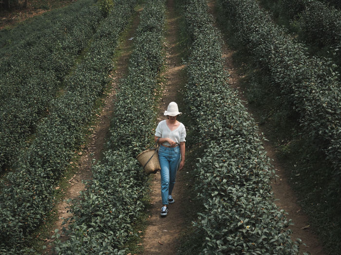 High angle view of woman walking on farm