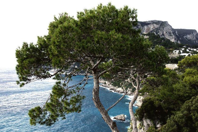 Capri, Italy First Eyeem Photo