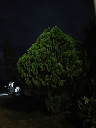 EyeEmNewHere Tree Night Green Color Growth No People Nature Outdoors Beauty In Nature Illuminated Sky