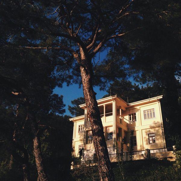 Hometown Trees D-Marin Göcek Villa Garden