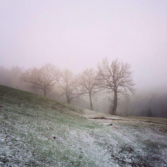 Spring Fog Foggy Melancholic Landscapes Landscape Nature Enjoy The Silence EyeEmSwiss