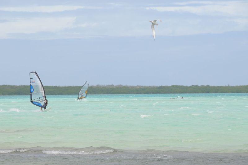 Windsurfers in