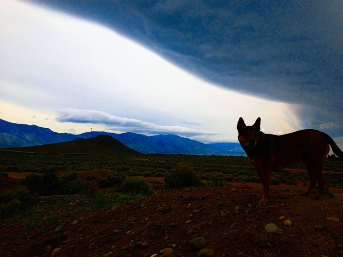Dog standing on grassy field against cloudy sky