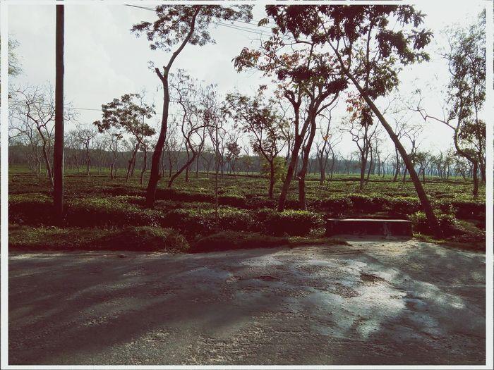 sunny day Hills Sunshine And Shadows Road Side View Road Side Photography Sylhet Bangladesh 🇧🇩 Tea Gardens Tree Sky