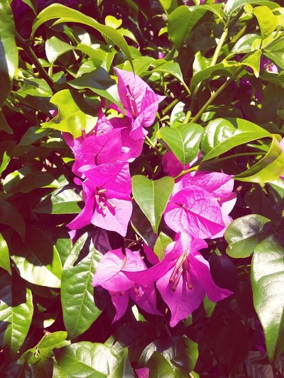 Flower Leaf Plant Nature Beauty In Nature Green Color Flower Head Petal Purple Growth No People Freshness Pink Color Fragility Day Outdoors Water Close-up First Eyeem Photo