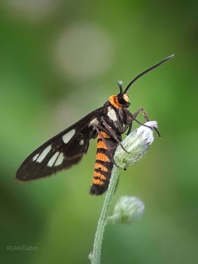moth in a