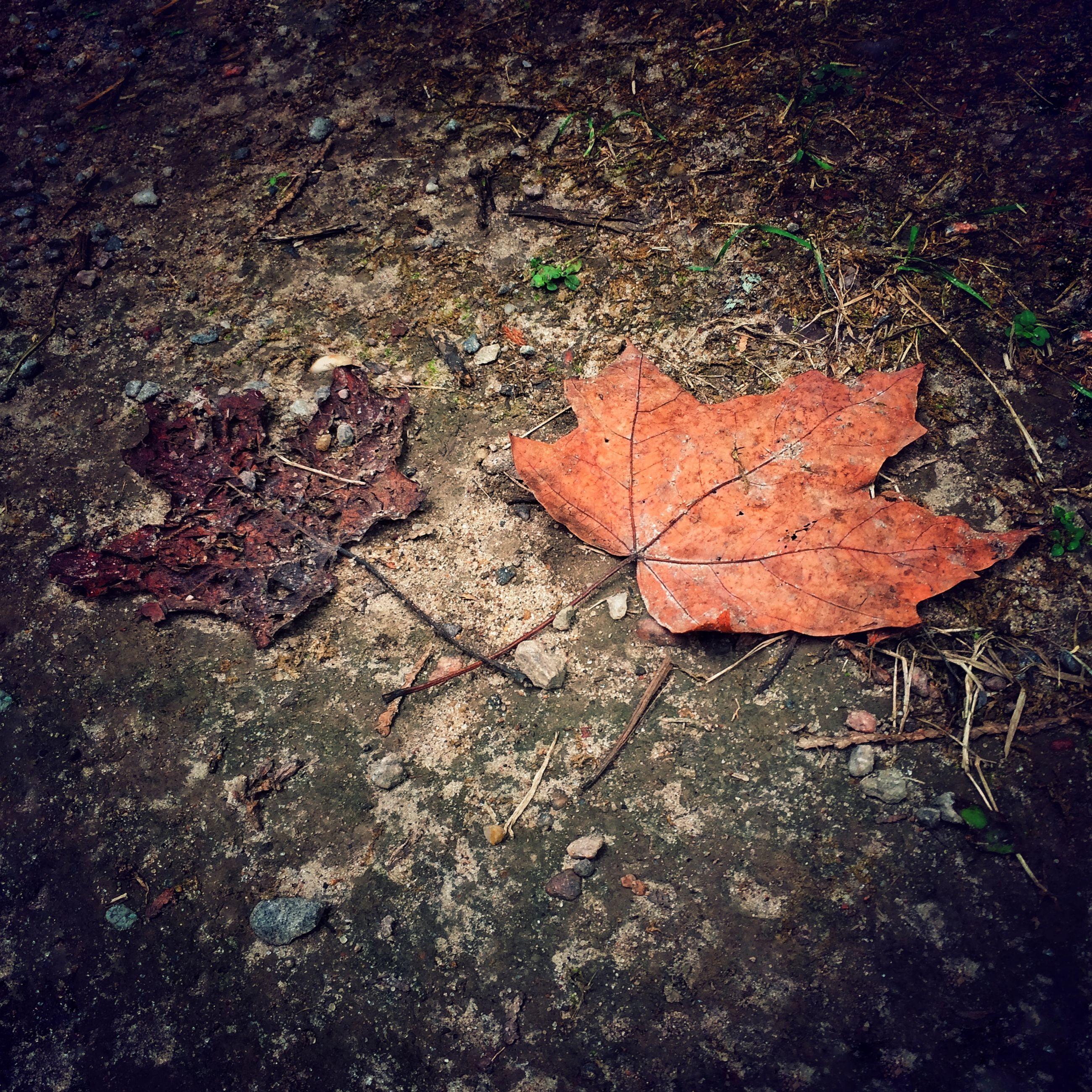 high angle view, textured, leaf, autumn, dry, fallen, full frame, damaged, abandoned, street, outdoors, cracked, backgrounds, no people, ground, day, change, nature, deterioration, close-up