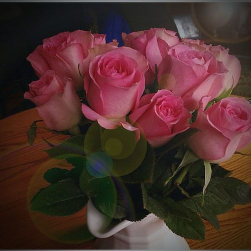 Is it cliche to staop and smell the rosses? Pink Roses Natural Beauty Spring Flowers