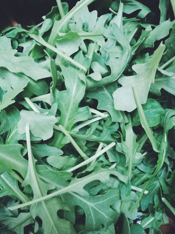 Leaf Green Color Plant No People Growth Freshness Backgrounds Food Healthy Eating Close-up Nature Outdoors Day Rucolasalad Rucola Rucolaselvatica Rucolla Rucola And Rucolasalat Herbs Green Green Leaves