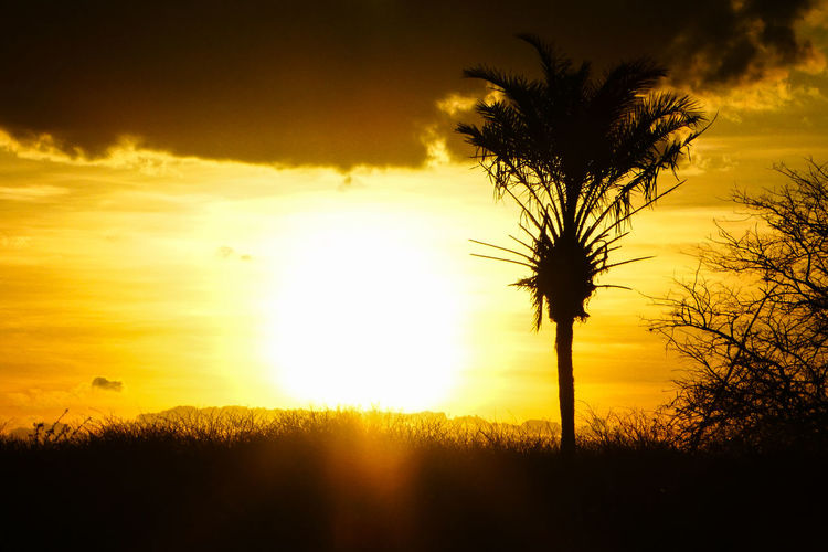 Sky Sunset Plant Silhouette Tree Scenics - Nature Cloud - Sky Beauty In Nature Orange Color Tranquility Tranquil Scene Nature Sun Palm Tree Tropical Climate No People Land Sunlight Field Idyllic Outdoors