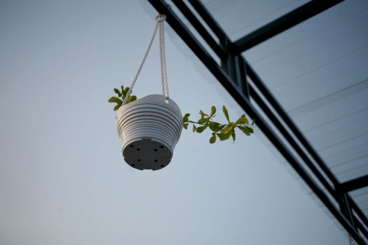 Low angle view of potted plant hanging against sky