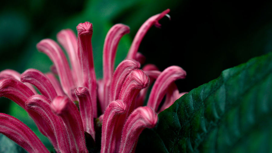 Beauty In Nature Botany Close-up Detail Flower Flower Head Focus On Foreground Gdansk Gdansk (Danzig) Greenhouse Greenhouse Plants Macro Nature No People Palm House PalmHouse Palmiarnia Petal Pink Pink Color Plant Purple Stamen Stamen Of The Flower First Eyeem Photo