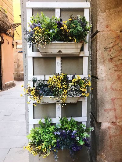 Flowers Plant Growth Architecture Building Exterior Built Structure Potted Plant Flowering Plant Flower Nature Building Wall - Building Feature Beauty In Nature