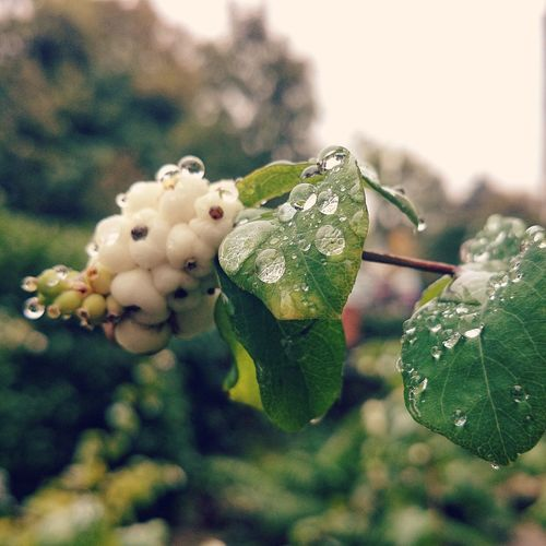 Beautiful rain drops on autumn leaves Hello World Raindrops Nature Autumn Leaves First Eyeem Photo
