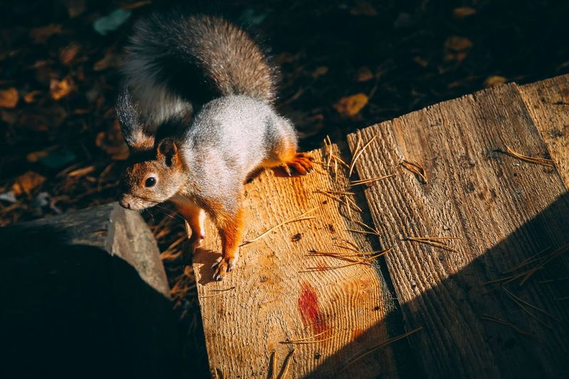 High angle view of squirrel on wood
