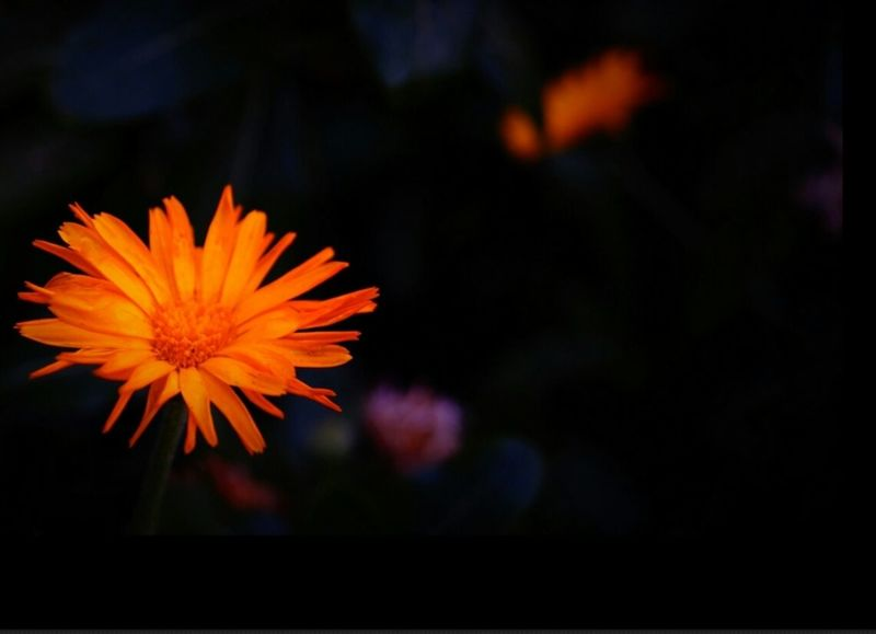 Flowers Are Blooming Flowers_collection Focus On Foreground Flowers Nature Orange Beauty In Nature No People Flowers,Plants & Garden Selective Focus Taking Pictures Close-up Nature Single Flower Color Of Life Close Up Bright Colors Focus On Macro Beauty