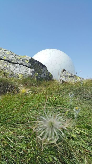 Mountain Flowers Austria Technology Everywhere Station Tecnology Meets Nature Landscapes