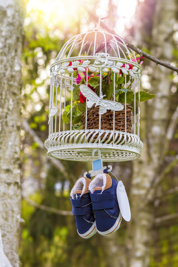 Baby Little Boy Shoe Wood Birdcage Cage Child Childhood Close-up Day Flower Focus On Foreground Hanging Holding Lifestyles Nature One Person Outdoors Plant Small Tree Waiting For A Baby