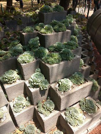 Suculentas Y Cactus Suculent Suculentas Suculentas. Plantas. Naturaleza Urbano Urban Spring Fever Cityscape City No People Relaxing Outdoors The Great Outdoors - 2017 EyeEm Awards