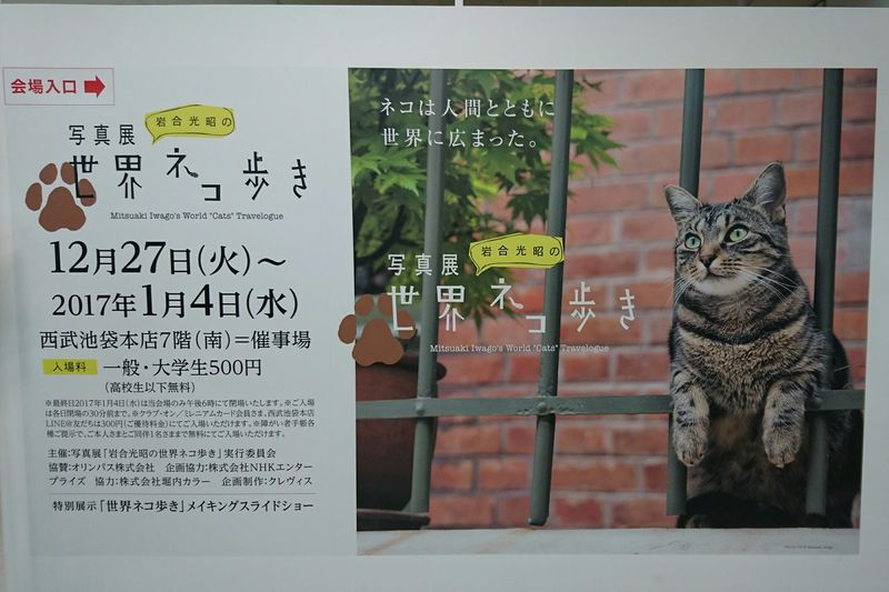 Exhibition FamousPhotographer Cat Japanese  Famous Cat Photography 岩合光昭 岩合光昭の世界ネコ歩き