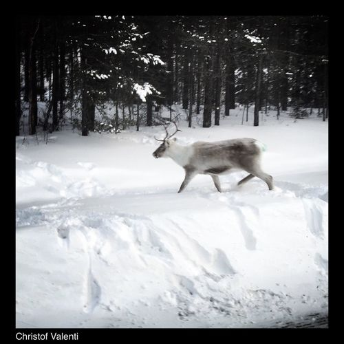 Someone left rudolf by the road Sweden On The Road Winter Streamzoofamily Eye Em Around The World North Trucking Myfamilyhunt