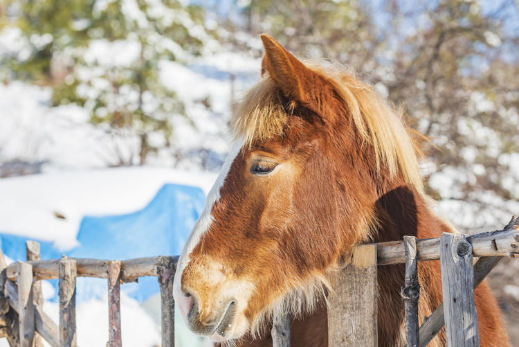 Close-up of a horse on snow