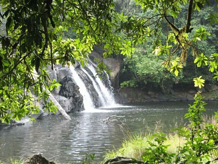 Lovely place called Coorg, Karnataka, India Waterfall Beauty In Nature Flowing Water Tranquility Coorgkarnataka Forgotten Memories Nature Tranquil Scene Nature Photography