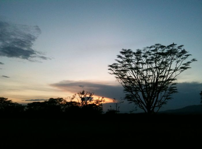 Acacia Tree Sunset Silhouettes Beauty In Nature Day Landscape Lone Nature No People Outdoors Scenics Silhouette Sky Sunset Sunset #sun #clouds #skylovers #sky #nature #beautifulinnature #naturalbeauty #photography #landscape Tranquil Scene Tranquility Tree