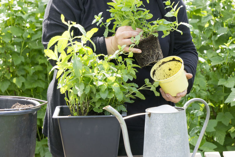 Midsection of woman gardening in garden