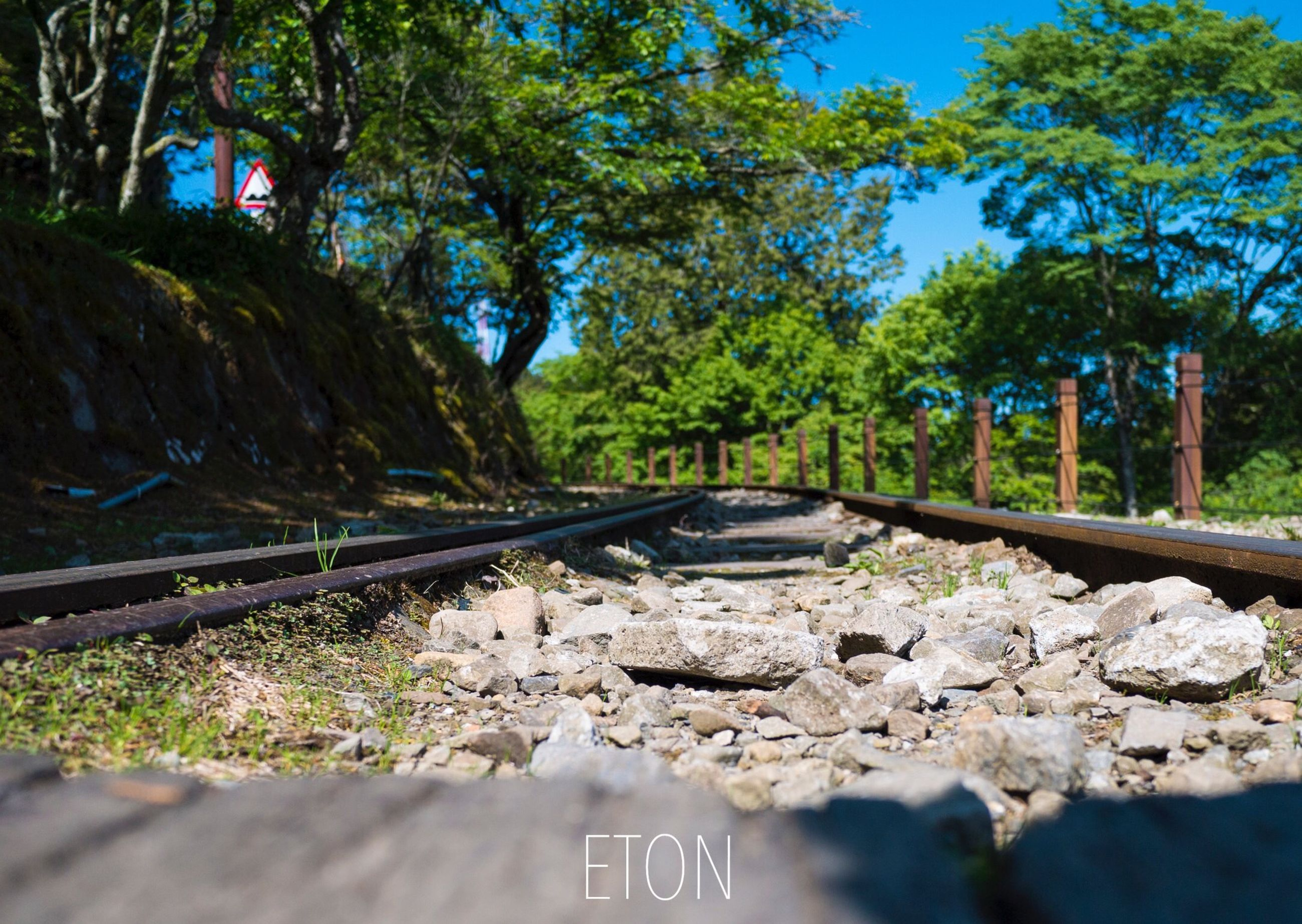 tree, transportation, railroad track, tranquility, bridge - man made structure, connection, nature, surface level, the way forward, diminishing perspective, forest, day, railing, metal, rail transportation, stone - object, no people, outdoors, tranquil scene, growth