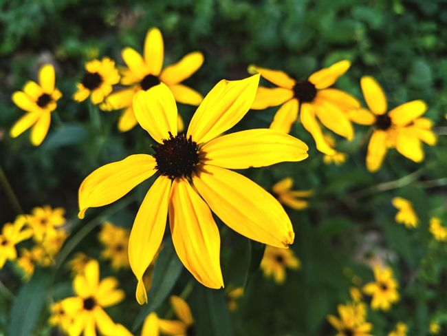 Yellow🌻 Beauty Beauty In Nature Blurred Background Backgrounds Tree Sunlight Day Sun Flower Head Black-eyed Susan Flower Yellow Petal Coneflower Close-up Plant Blooming Pollen In Bloom Sunflower Daisy Plant Life Single Flower Botany Flowering Plant