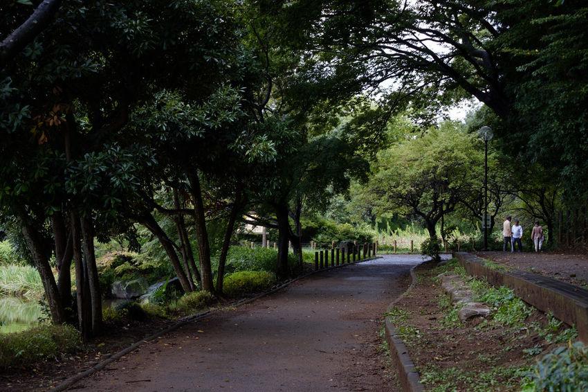 FUJIFILM X-T2 Japan Japan Photography Nature Pond Fujifilm Fujifilm_xseries Ichikawa Nature_collection Park X-t2 じゅん菜池緑地 公園 市川