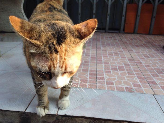 Guilty cat Thai Street Cat