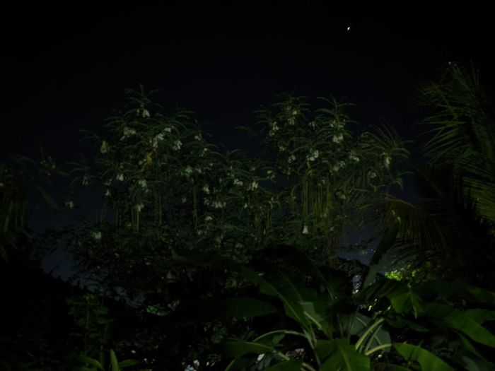 Close-up of fresh plants on field against sky at night