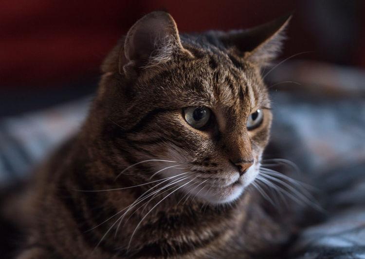 cat Katzen
