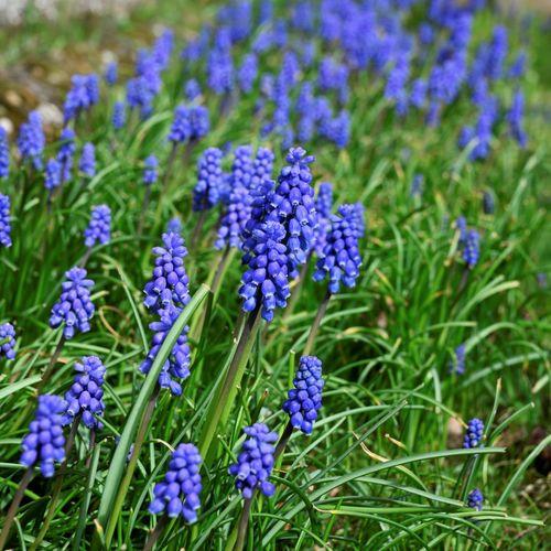 Purple Flower Flower Flowering Plant Plant Beauty In Nature Growth Vulnerability  Fragility Freshness Land Day Close-up No People Nature Green Color Purple Flower Head Outdoors