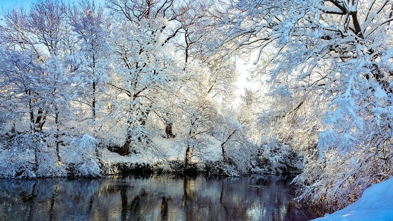 winter wonderland Wales Nature Reserve Today Winter Snow Reflection Forest снег Природа река Rio Inverno Hiver Hafren Severn Backgrounds Full Frame Textured  Pattern Day No People Sky Water Nature