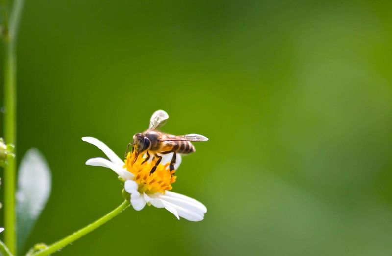 Bee on flower Insect Flower Animal Themes Animals In The Wild One Animal Fragility Petal Nature Freshness Beauty In Nature Animal Wildlife Wildlife Symbiotic Relationship Flower Head No People Outdoors Growth Plant Pollination Day