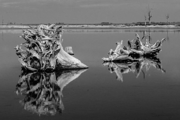 View of driftwood in lake