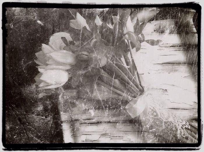 Forgotten Flowers EyeEm Best Edits