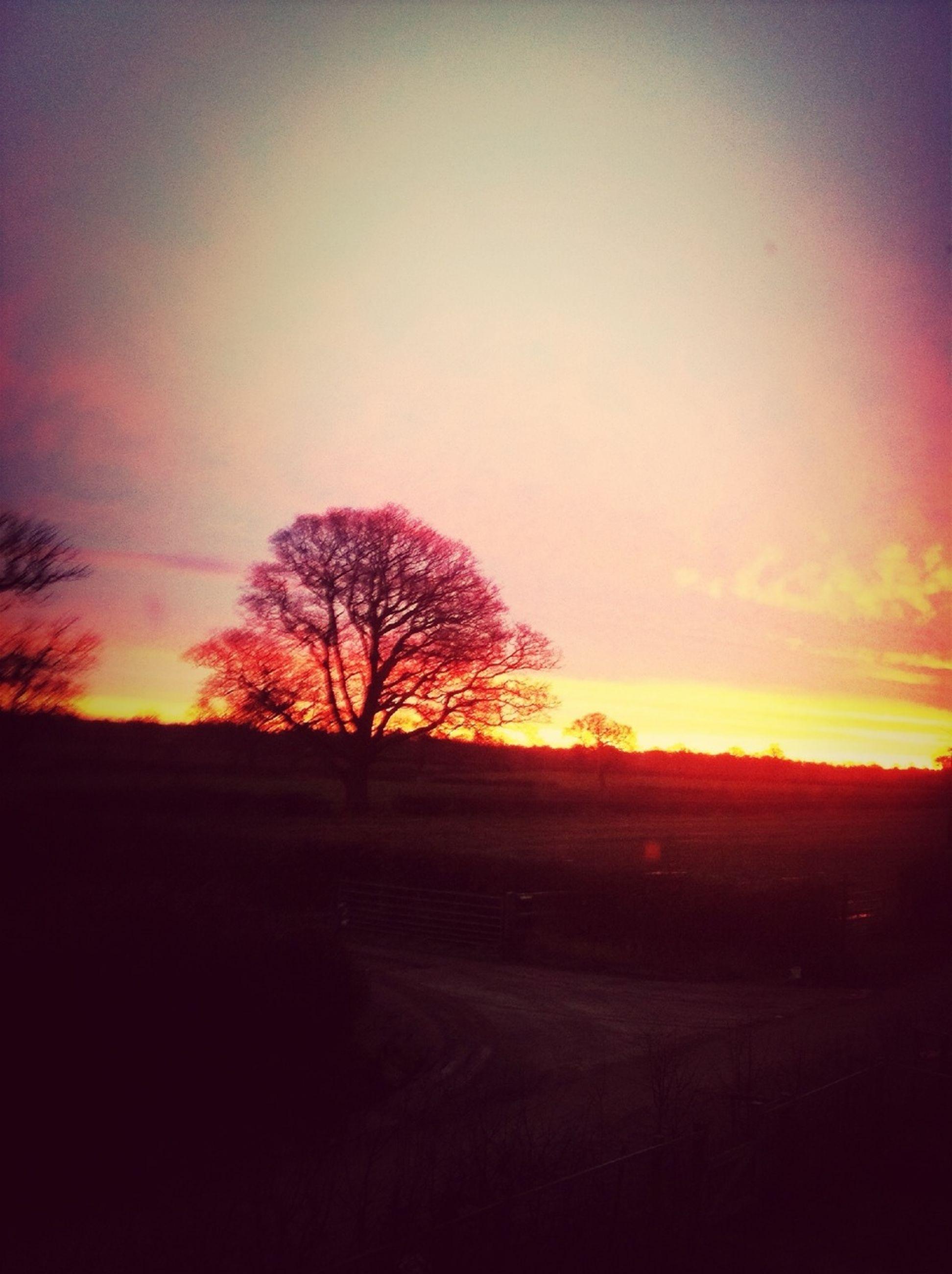 sunset, silhouette, tranquil scene, tranquility, tree, bare tree, scenics, landscape, sky, orange color, beauty in nature, nature, field, idyllic, dark, dusk, outdoors, no people, non-urban scene, remote