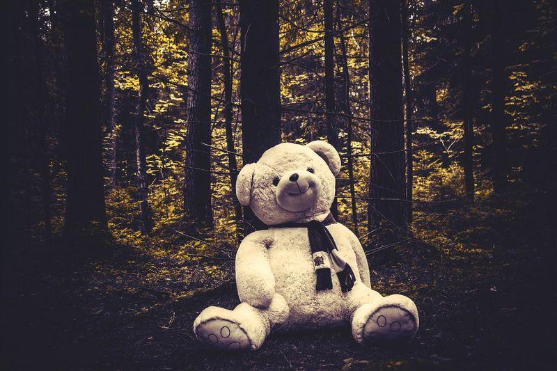 Teddy Bear In Forest