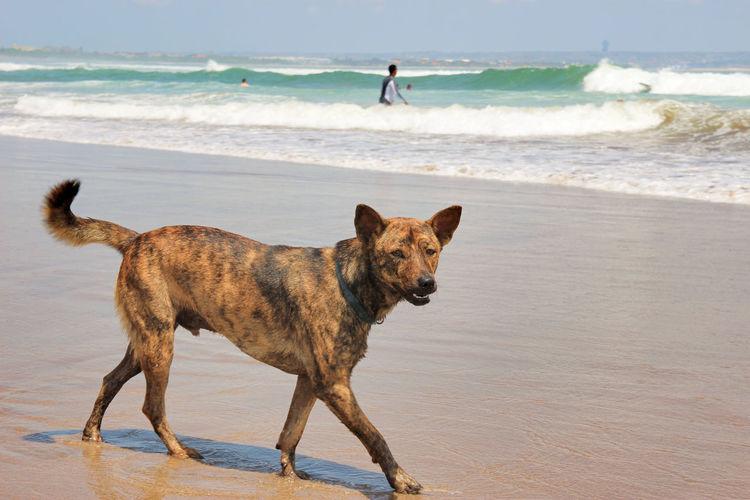 dog walks by