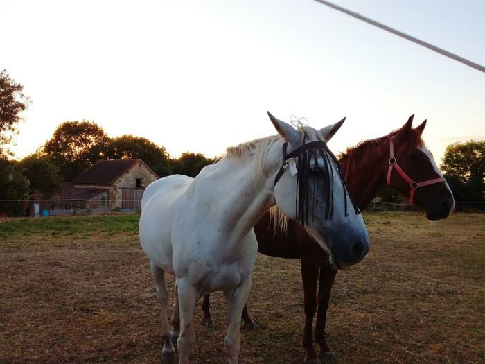 Horses Horse Photography  Calm Nature Tranquility Natural Beauty Rural Scene Animals Animal Photography